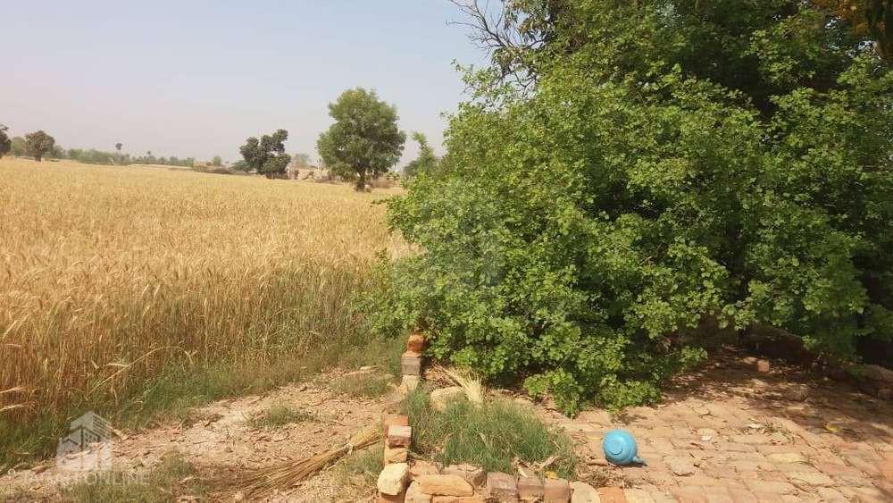 zarai zameen for sale haroonabad 148 6r
